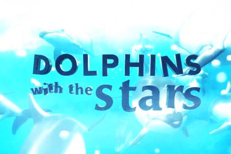 Golfinos Sic Pode Adiar A Adaptação Portuguesa De «Dophins With The Stars»