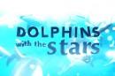Dolphins Pan Alerta Que Suspensão De «Golfinhos Com As Estrelas» Não É Definitiva