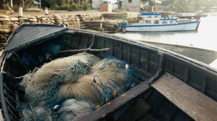 Nosso Futuro Estarão As Populações De Peixes Nos Oceanos À Beira Do Colapso? A Resposta Em «Nosso Futuro»