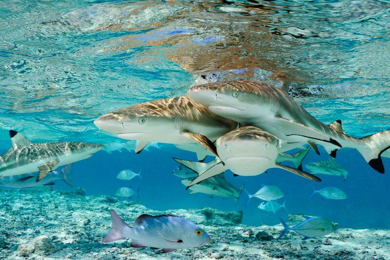 Oceanario National Geographic Oceanário De Lisboa E National Geographic Inauguram Exposição «Sharks»