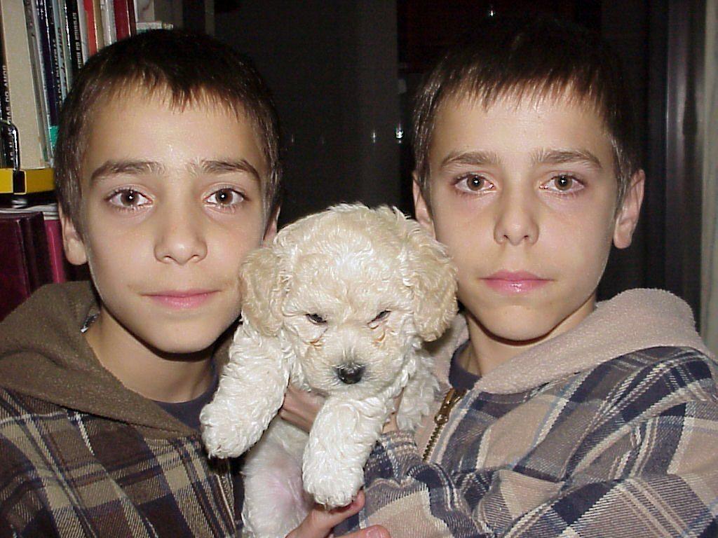 Diogo Picarra Cao &Quot;Para Sempre No Nosso Coração&Quot;: Diogo Piçarra Chora Morte Do Cão