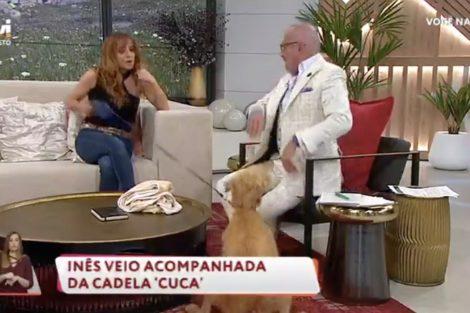 Cao Ataca Goucha 2 Susto! Cadela De Inês Herédia 'Ataca' Goucha Durante O 'Você Na Tv'