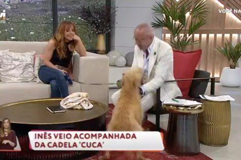 Cao Ataca Goucha Susto! Cadela De Inês Herédia 'Ataca' Goucha Durante O 'Você Na Tv'