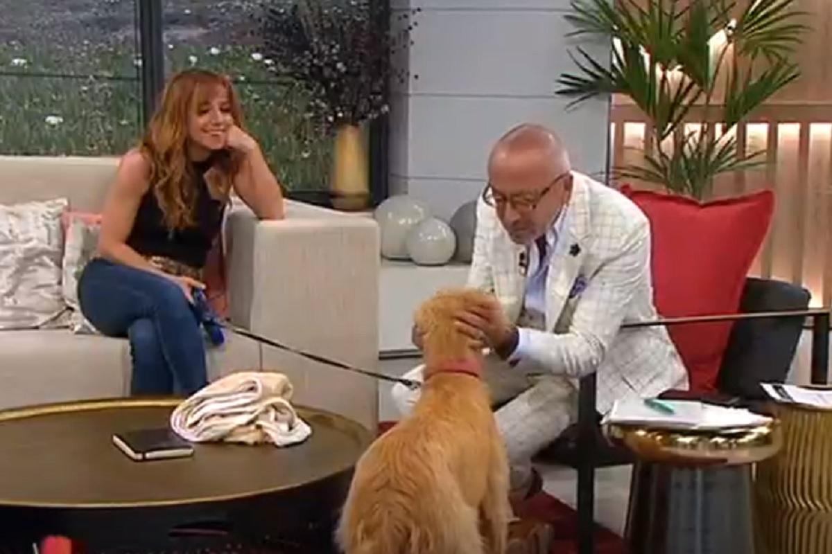 Manuel Luis Goucha Ines Heredia Susto! Cadela De Inês Herédia 'Ataca' Goucha Durante O 'Você Na Tv'