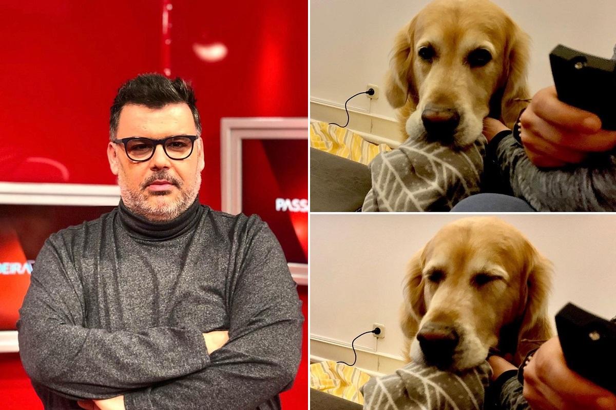Passadeira Vermelha Nuno Azinheira Cão Passadeira Vermelha: Cão De Comentador É Atacado Na Rua! Polícia Quer Adiar A Queixa