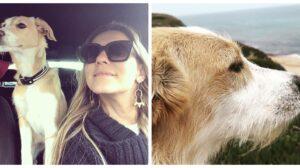 Joana-Solnado-cadela-atropelada