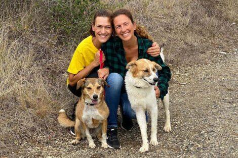 Fatima Lopes Voluntariado Animais 3
