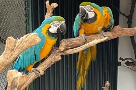 Joao-Baiao-Quinta-Jardim-Zoologico-Animais-9