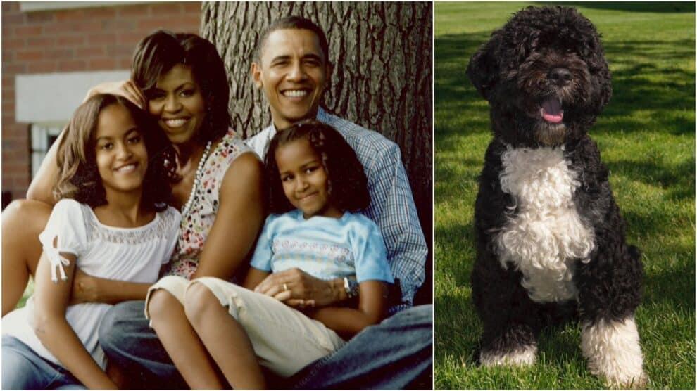 Barack Obama, Michelle Obama, Cão Água Português Bo